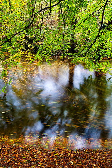 Swirling Leaves