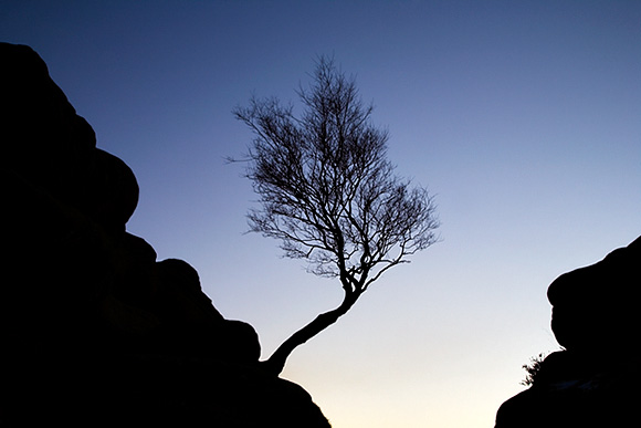 Winter Tree Silhouette at Brimham Rocks