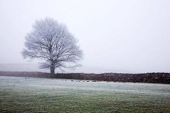 Frosty Tree, Wensleydale, Yorkshire Dales