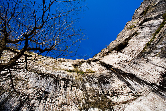 Bare Tree and Malham Cove