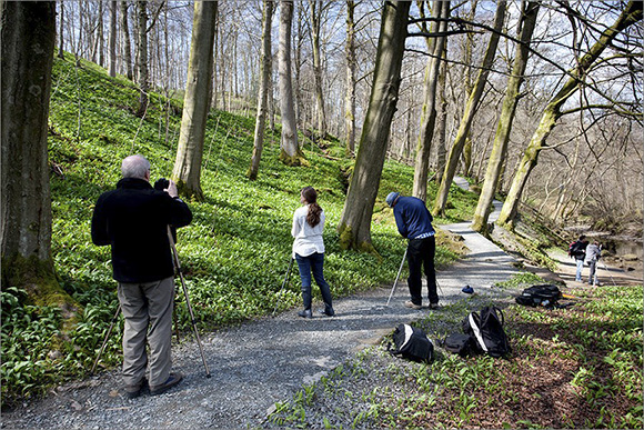 Photographing in Strid Wood