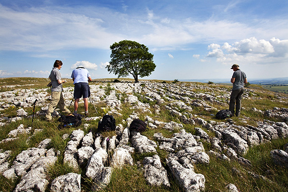 Photographing a Lone Tree on Limestone Pavement near Malham