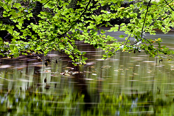 Leaves on the River Wharfe by Sam Oakes