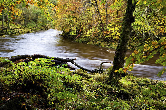 The swolen River Wharfe flows through Strid Wood by Mark Sunderland