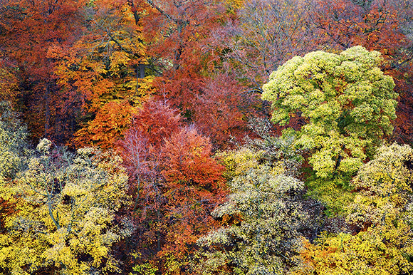 Autumn Trees in the Nidd Gorge by Mark Sunderland