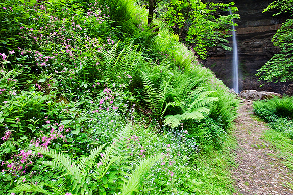 Forest Ferns and Flowers by the Path at Hardraw Force