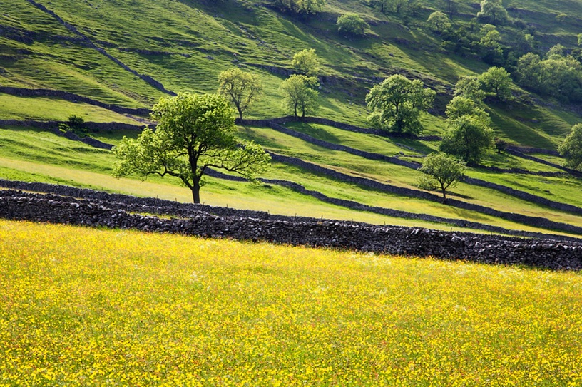 Upper Wharfedale in Summer