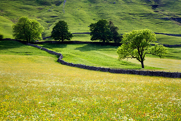Buttercup Meadow Upper Wharfedale