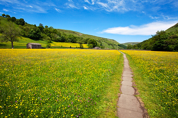 Paved Footpath across Buttercup Meadows at Muker