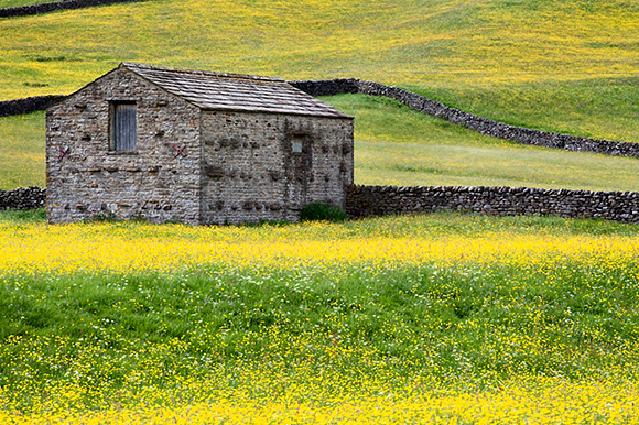 Field Barn and Wild Flower Meadows near Muker