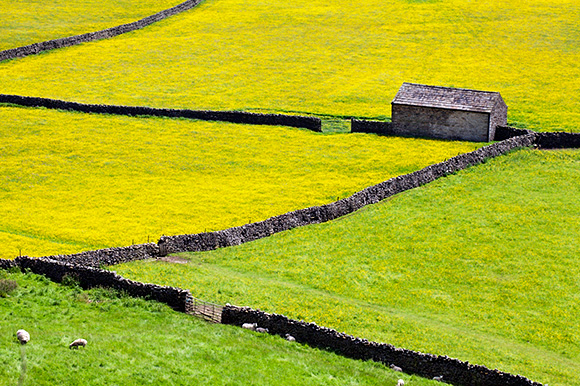 Barn and Dry Stone Walls in Buttercup Meadows at Gunnerside