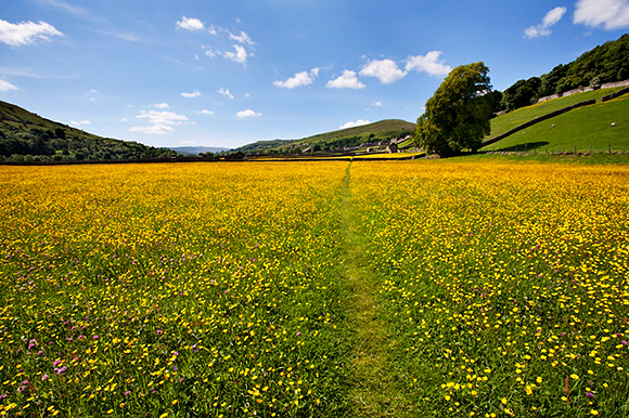 Path across Buttercup Meadows at Gunnerside