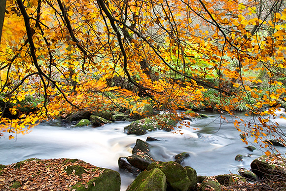 Autumn Colours by Hebden Water at Hardcastle Crags