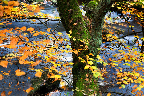 Autumn Colours along the Mill Trail at Hardcastle Crags