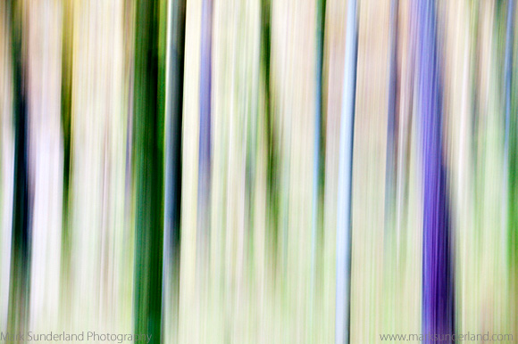 Abstract Pine Trees in Woodland near Grange Borrowdale The Lake