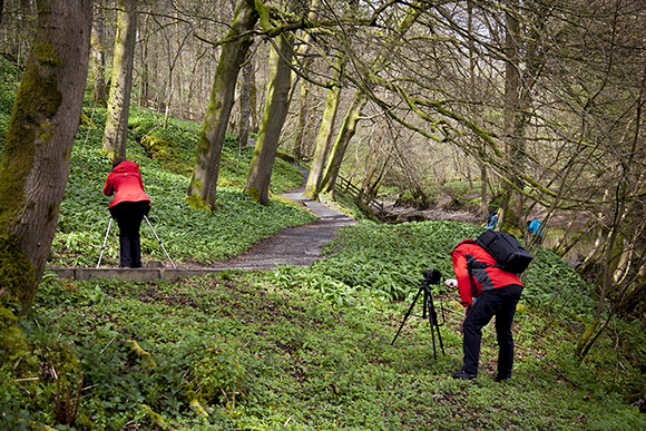 Looking at the lush wild garlic in Strid Wood