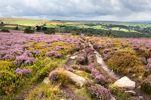 Track across Moorland above Guise Cliff near Pateley Bridge