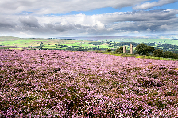 Heather Moorland and Yorkes Folly near Pateley Bridge