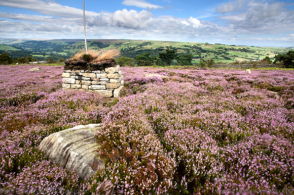 Shooting Shelter on Heather Moorland at Guise Cliff near Pateley