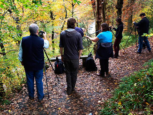 Photographing Vibrant Autumn Colours in Strid Wood