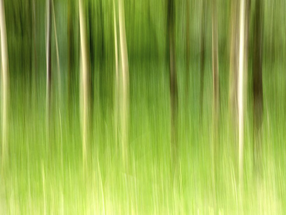 Demonstration Intentional Camera Movement Shot in Strid Wood