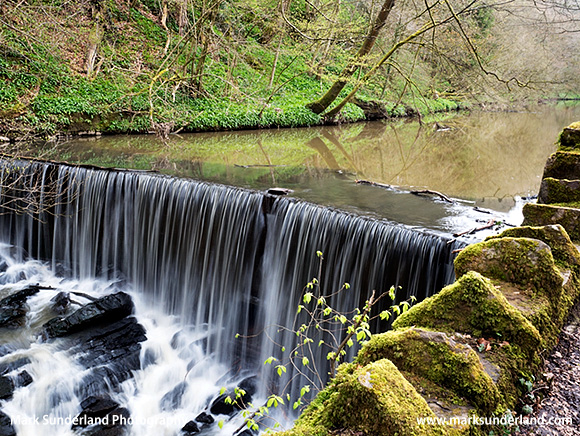 The Weir below Long Dam in Spring Skipton Woods Skipton North Yorkshire England