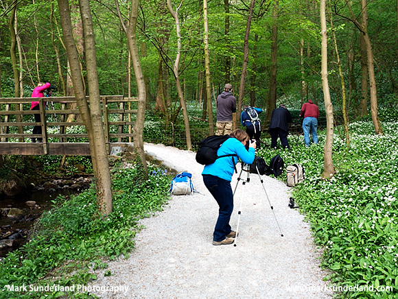 Photographing Wild Garlic in Strid Wood