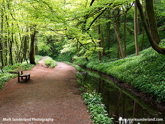 Skipton Woods Skipton North Yorkshire England