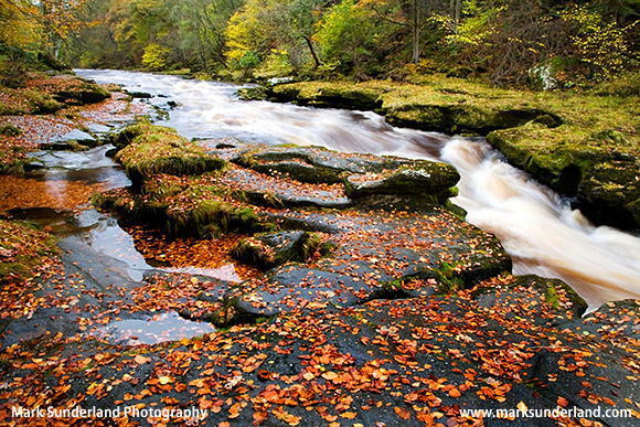 The Strid on the River Wharfe in Full Flow After Heavy Rain Yorkshire Dales National Park England
