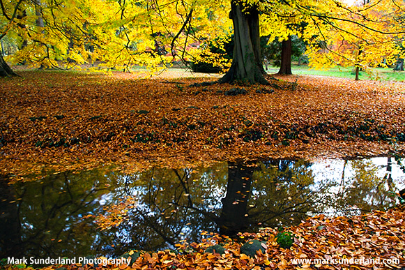 Henrys Island at Thorp Perrow arboretum, near Bedale