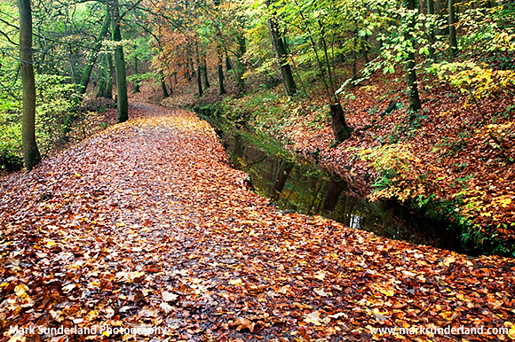 Autumn Colours on the Main Path at Skipton Woods