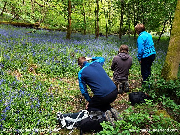 Amongst the Bluebells in Strid Wood