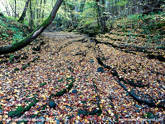 Autumn Leaves on the Dry Riverbed of the River Skell in Chinese Wood