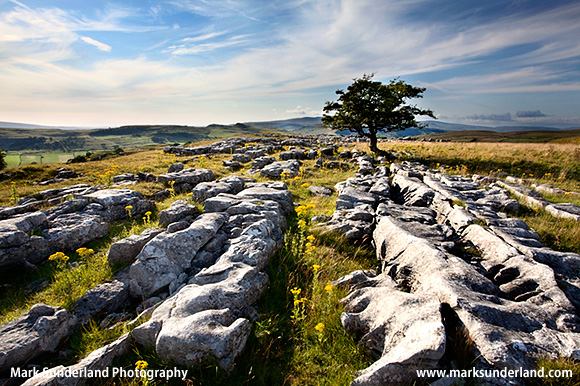 Lone Tree and Limestone Pavement at Winskill Stones