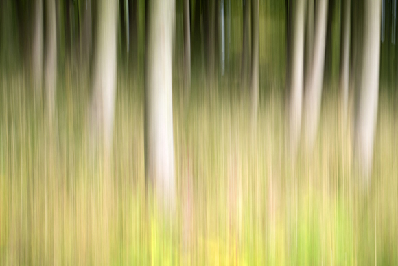 Intentional Camera Movement ICM of trees at Thruscross