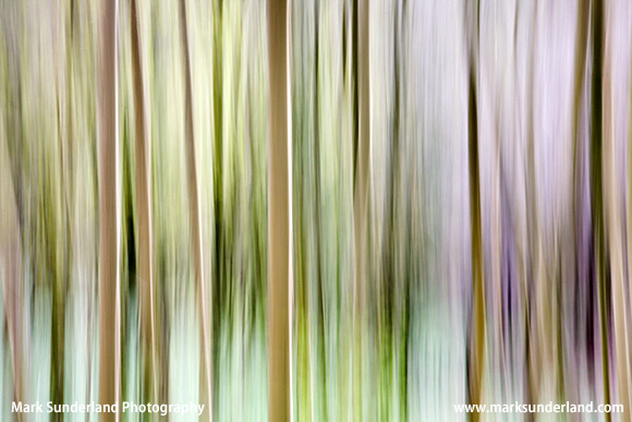 Abstract View of Millington Wood in Spring, near Pocklington
