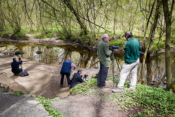 Looking at the reflections in Strid Wood. Bolton Abbey Natural Light Photography Workshop 22 April 2017