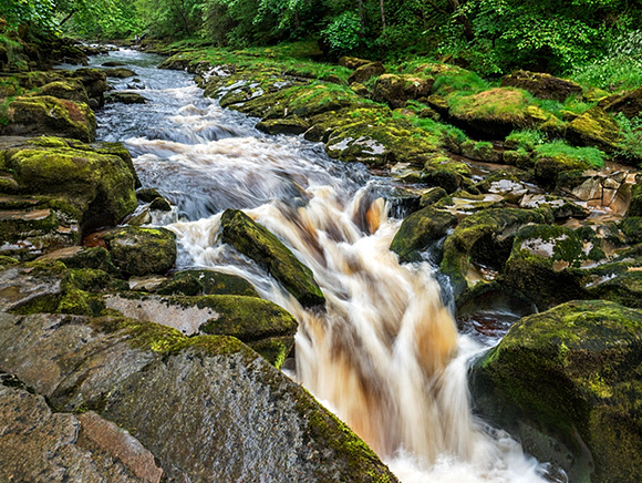 The Strid, a Narrow Constriction in the River Wharfe in Strid Wood