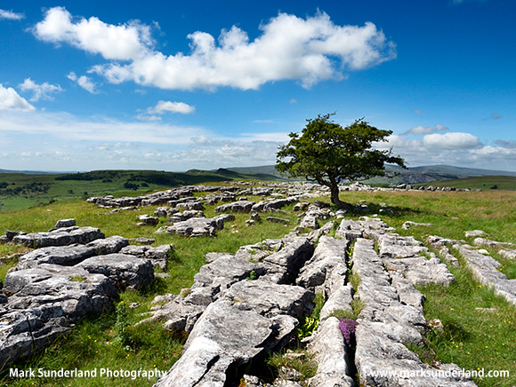 White Clouds Passing Over the Lone Tree at Winskill Stones