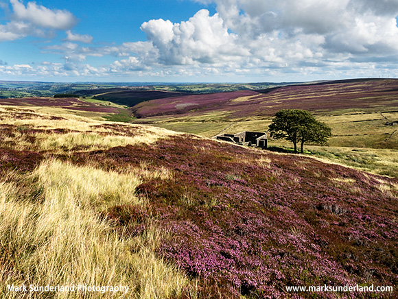 Heather at Top Withens on Haworth Moor