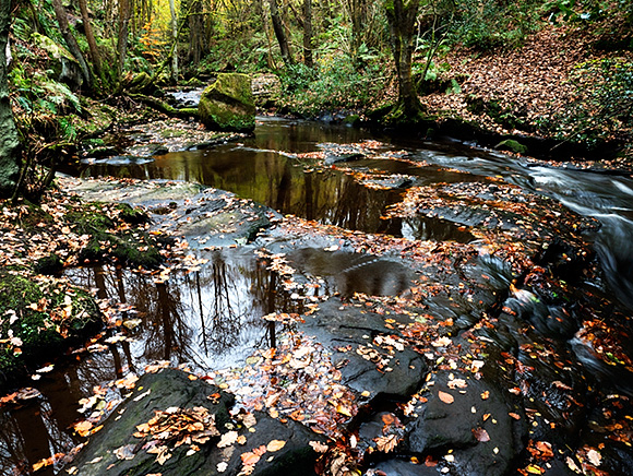 Autumn Leaves in Harden Beck