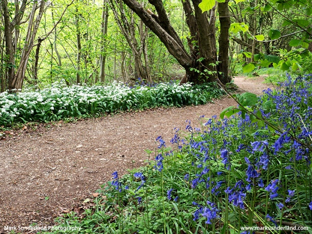 Spring Woodland in the Nidd Gorge