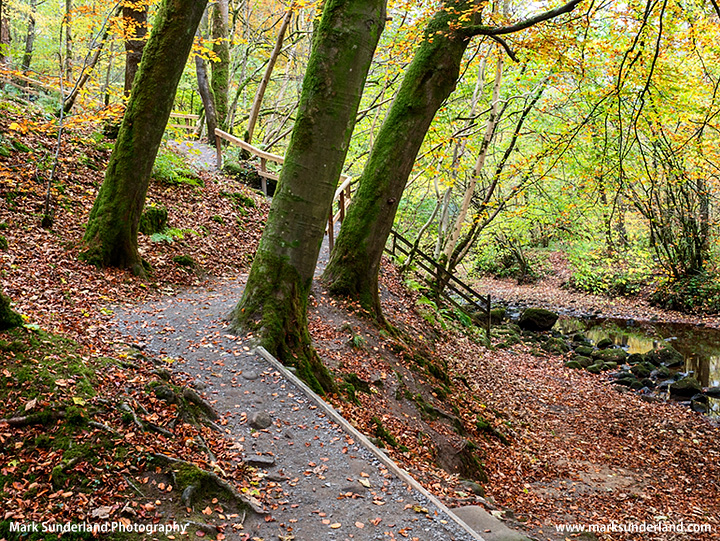 Strid Wood in Autumn
