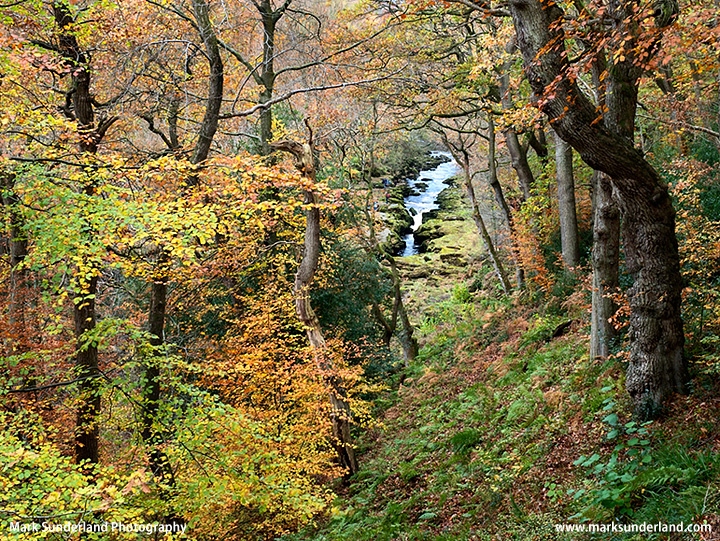 The Strid through Autumn Trees in Strid Wood
