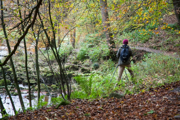 Amongst the Autumn colours in Strid Wood