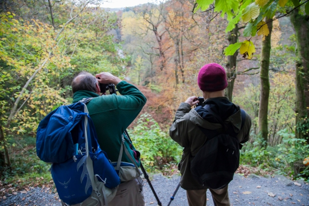 Amongst the Autumn colours at Harrisons Ford Seat in Strid Wood