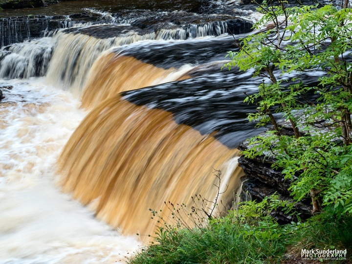 Peaty Water in Lower Aysgarth Falls on the River Ure Wensleydale Yorkshire Dales North Yorkshire England