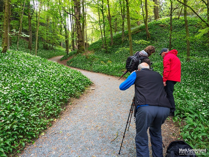 An extra stop for the wild garlic flowers