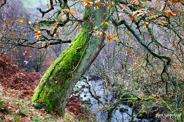 Autumn Tree in the Valley of Desolation