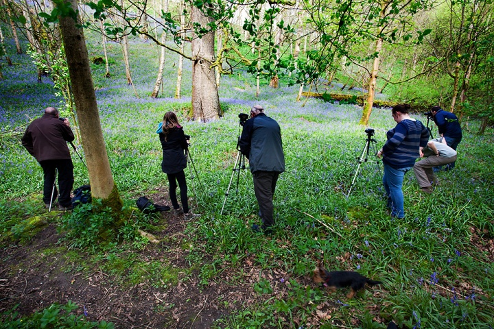 Photographing bluebells in April 2014